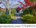tenryu-ji, maple, yellow leafe 77569554