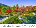 tenryu-ji, maple, yellow leafe 77569555