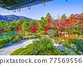 tenryu-ji, maple, yellow leafe 77569556