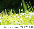 botanic, botanical, vegetative 77573186