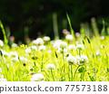 botanic, botanical, vegetative 77573188