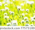 bloom, blossom, blossoms 77573189