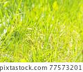 grass, grasses, the grass 77573201