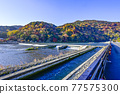 togetsu bridge, Arashiyama, spring 77575300