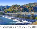 togetsu bridge, Arashiyama, katsura river 77575309