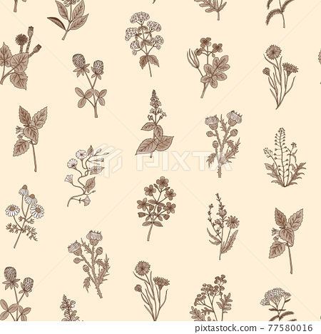 hand drawn medical herbs pattern or background illustration 77580016