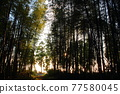 Bamboo grove 77580045