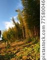 bamboo 77580046