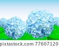 Blue hydrangea flower 77607120