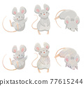 animal, animals, mouse 77615244
