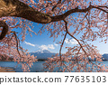 Mt. Fuji, Japan on Lake Kawaguchi 77635103