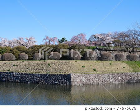 Goryokaku Park 77675679