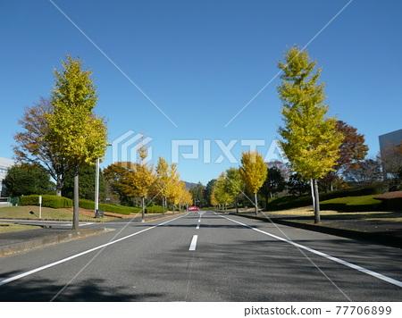 autumnal, road, straight path 77706899