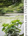 botanic, botanical, plant 77712186