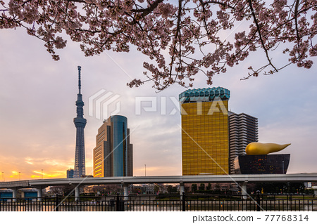 Tokyo, Japan cityscape on the Sumida River 77768314