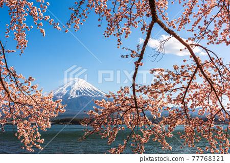 Mt. Fuji, Japan on Lake Kawaguchi 77768321