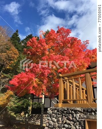 Autumnal leaves and fine weather 77808061