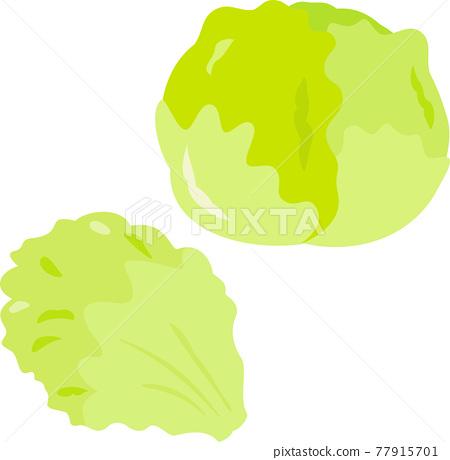 lettuce, lettuces, vegetables 77915701