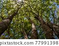 樹抬起頭來 77991398