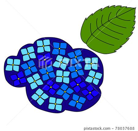 수국, 자양화, 꽃 78037688