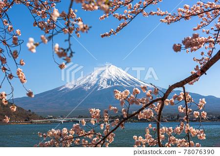 Mt. Fuji, Japan on Lake Kawaguchi during Spring Season 78076390