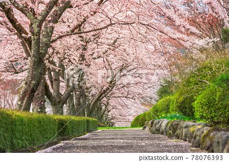 Shizuoka, Japan in spring 78076393