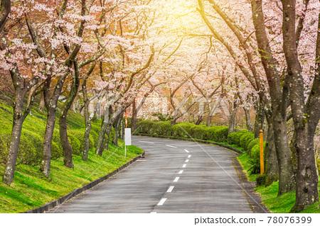Shizuoka, Japan in spring 78076399