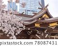 벚꽃, 왕벚나무, 봄 78087431