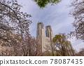 벚꽃, 왕벚나무, 봄 78087435