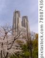 벚꽃, 왕벚나무, 봄 78087436