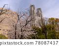 벚꽃, 왕벚나무, 봄 78087437