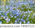 화단, 꽃밭, 네모필라 78087522