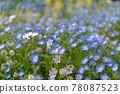 화단, 꽃밭, 네모필라 78087523