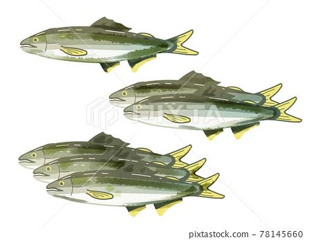 ayu, fish, fishes 78145660