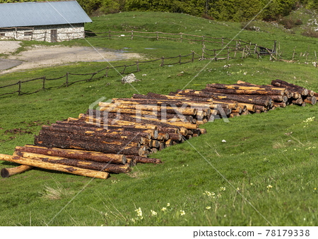 A stack of cut tree trunks 78179338