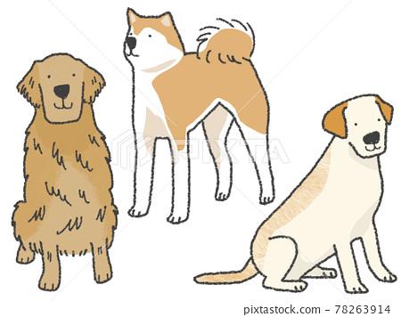 개, 강아지, 대형견 78263914