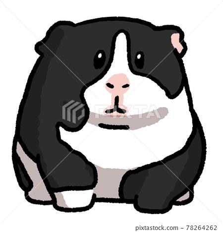 Guinea pig 78264262