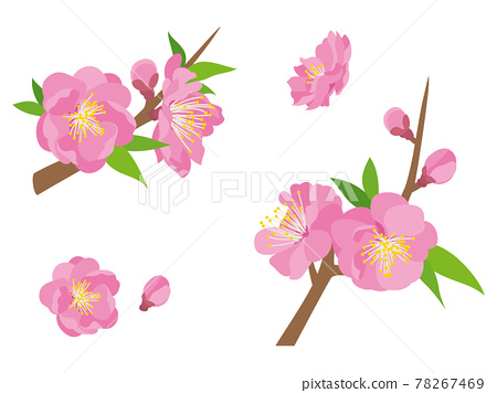 Pink peach blossoms 78267469