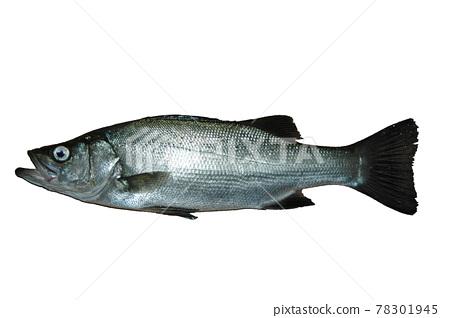 Hirasuki caught by Ukifukase fishing 78301945