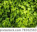植物 植物學 植物的 78302563