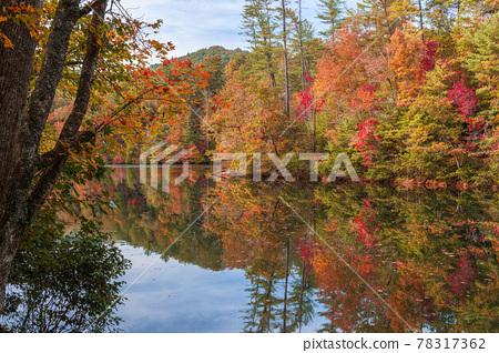 Lakeside fall foliage at Santeetlah Lake, North Carolina 78317362