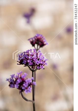 bloom, blossom, blossoms 78432247