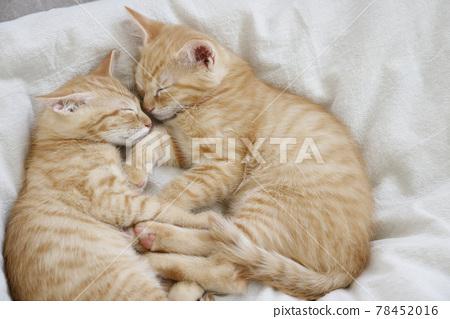고양이, 아기 고양이, 새끼 고양이 78452016