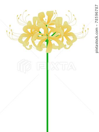 cluster amaryllis, bloom, blossom 78596787
