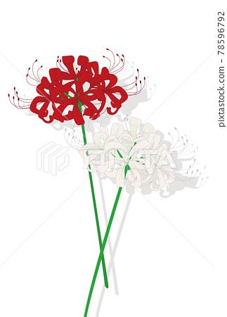 석산, 피안화, 꽃무릇 78596792