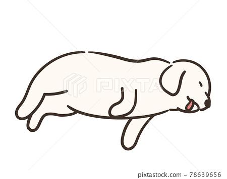dog, dogs, lie down 78639656
