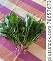 freshly harvested, freshly yielded, spinach 78657673