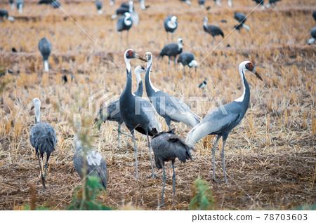 bird, birds, fowls 78703603