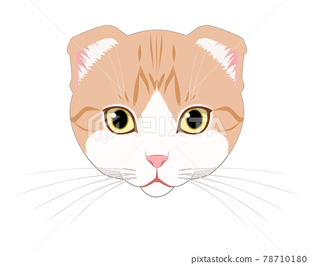 cat, pussy, animal 78710180