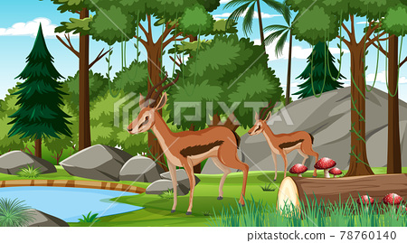 Two Impala in forest at daytime scene with many trees 78760140